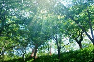 クロロフィルと自然界